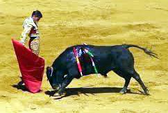 bulls n red clr