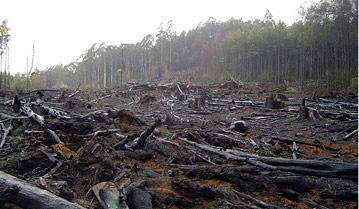 deforestw