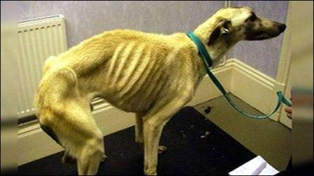 dog cruelty