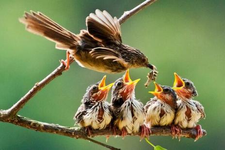 VG bird feeding