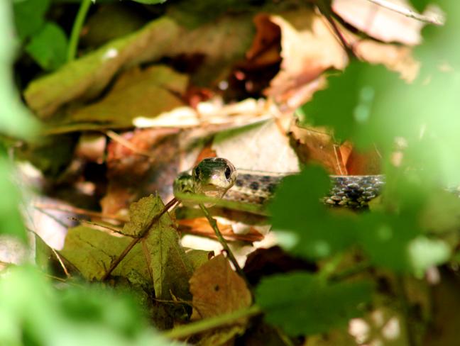 bcutelittlesnake copy