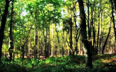 Forest man Jadav forest