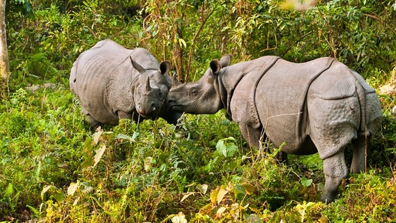Forest man Jadav rhino