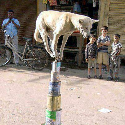 dog balancing