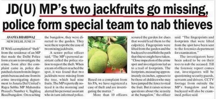 jackfruit stolen