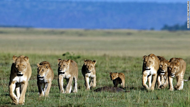 lions good