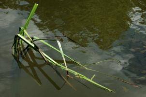 Broken, Bent Grass