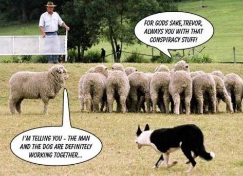 man, dog and sheep
