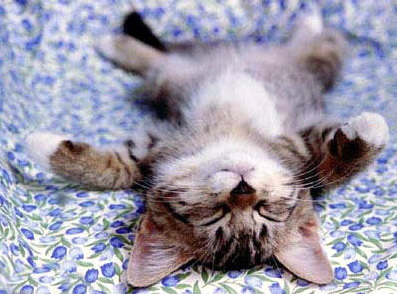 Relaxing Kitten