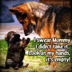 Pup and Mom