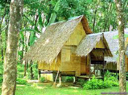 House on Bamboo Stilts
