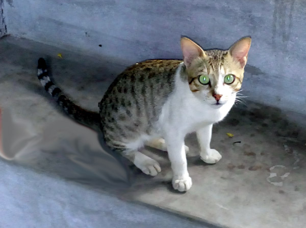 Catboy Rt