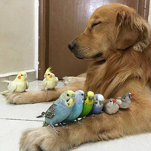 doggie n birds