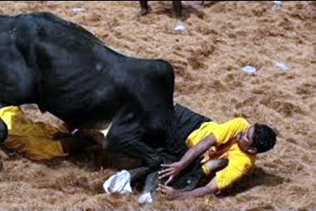 Man injured at Jallikattu