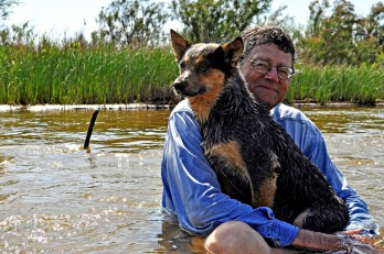 Schroedinger's dog vide article in blog
