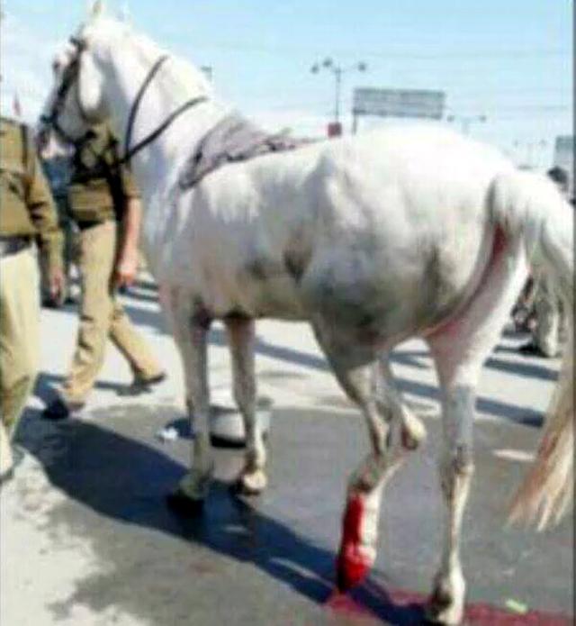 horse leg broken