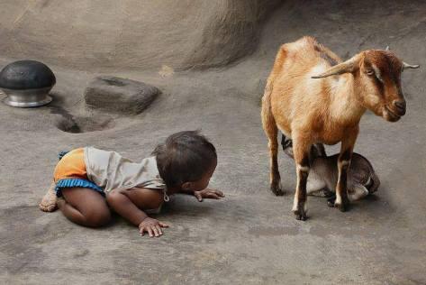 Child, goat, kid