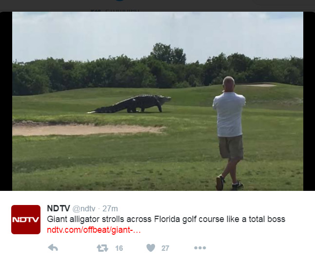 Giant Gator in Golf course