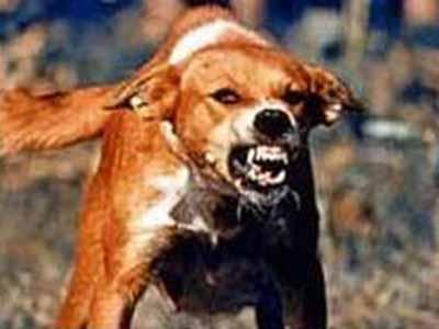 Mad Dog Rabies Disease