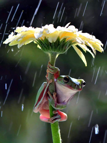 frog flower umbrella