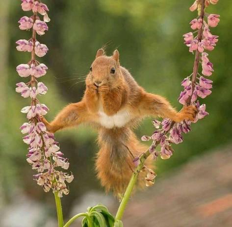 squirrel acrobat