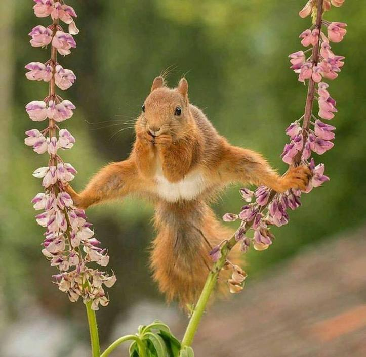 squirrel acrobat