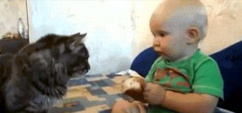 The Cat Cares!