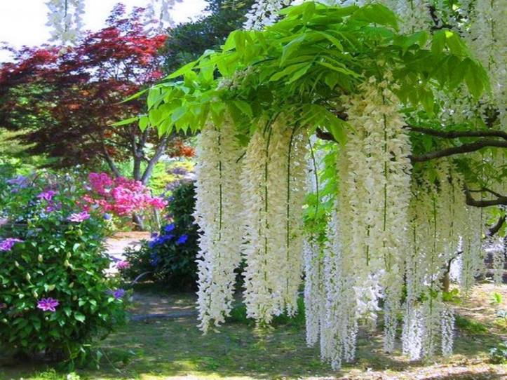 lovely-white-hanging-flows