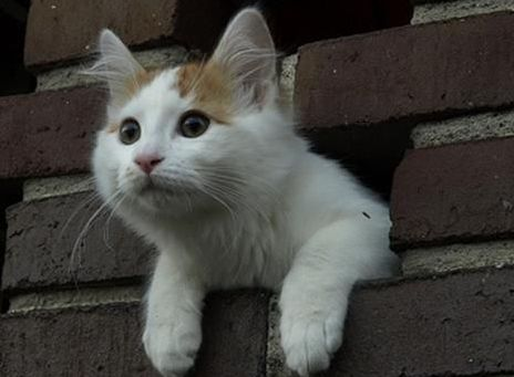 cat-in-the-wall
