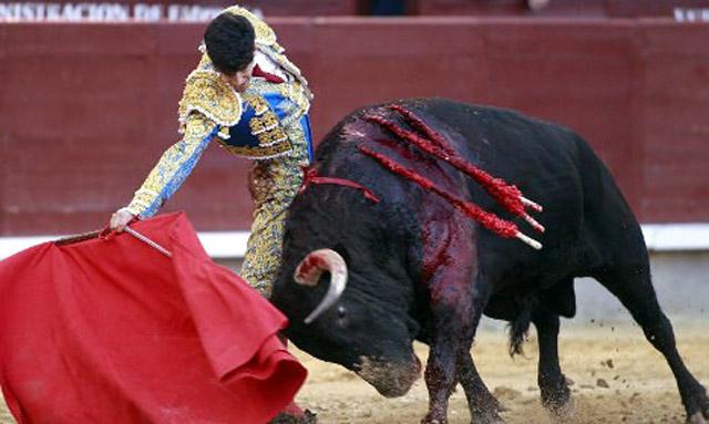 bull-f-sp-a