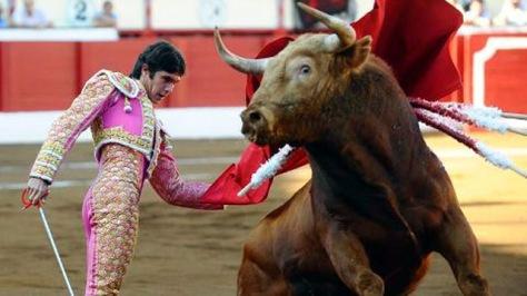 bull-f-sp-b