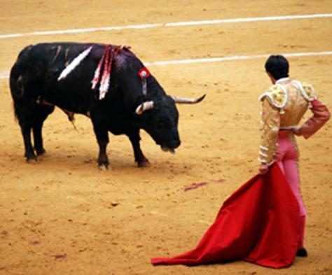 bull-f-sp-c