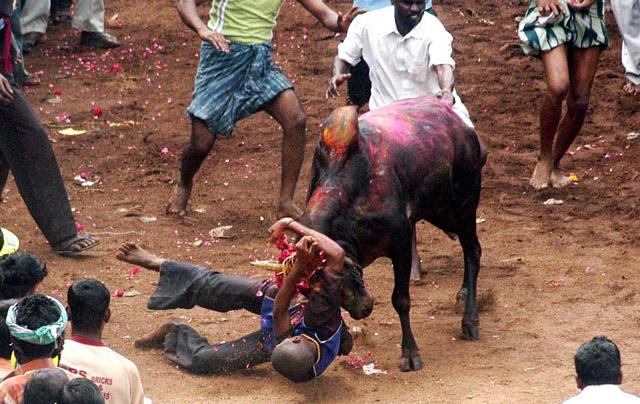 bull-hurts