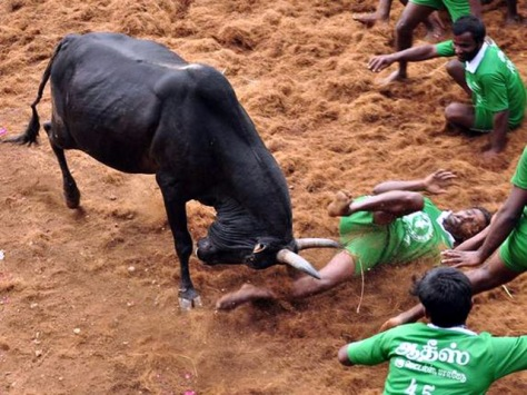 bull-injury