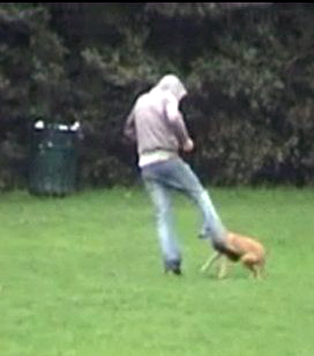 kicking-dog