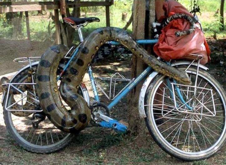 python-cycle